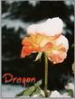 dragon65