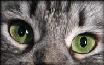 Zielony_Kot